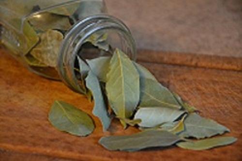 Alloro-Erbe-aromatiche