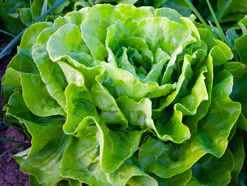 Dieta-vegetariana-nemica-per-l-ambiente