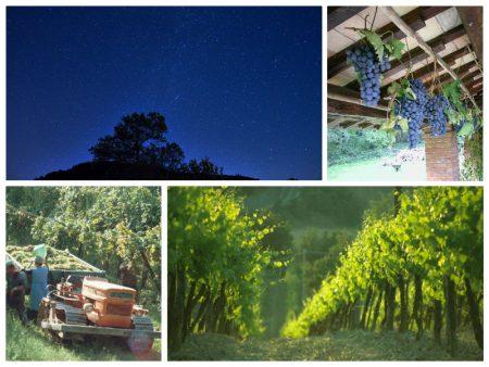 Terre-di-Faenza-vino-sotto-le-stelle