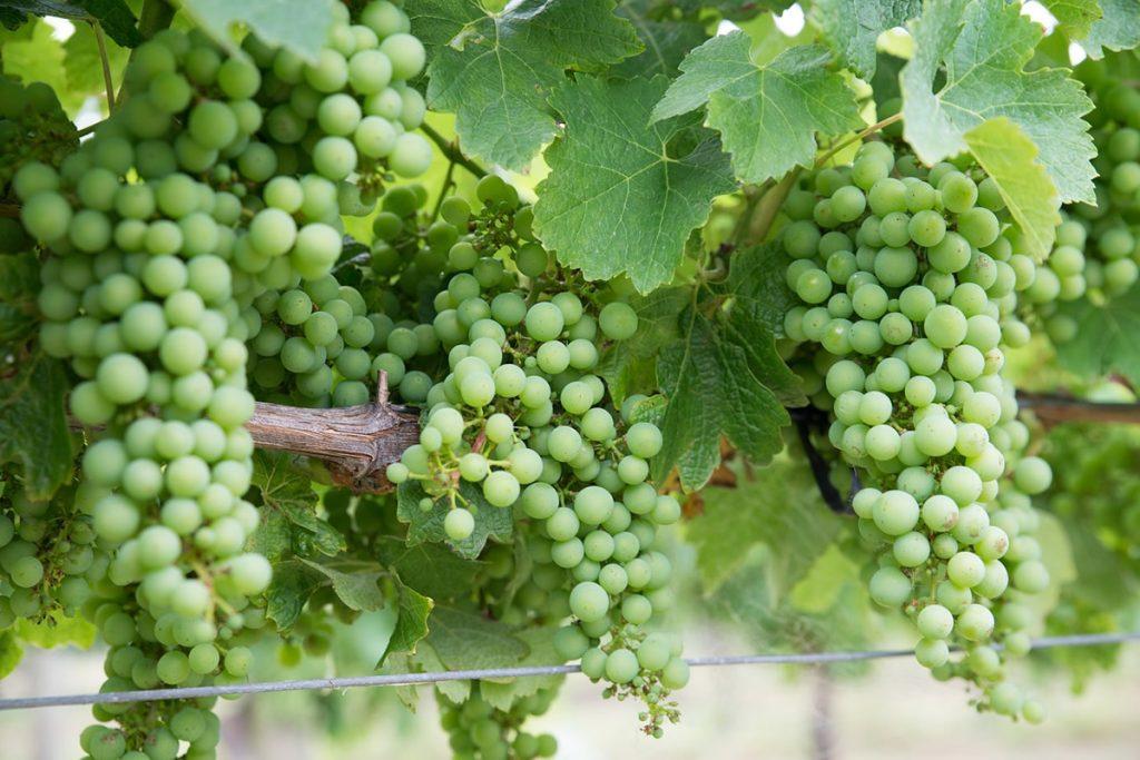 Mineralità nel vino, cosa significa?