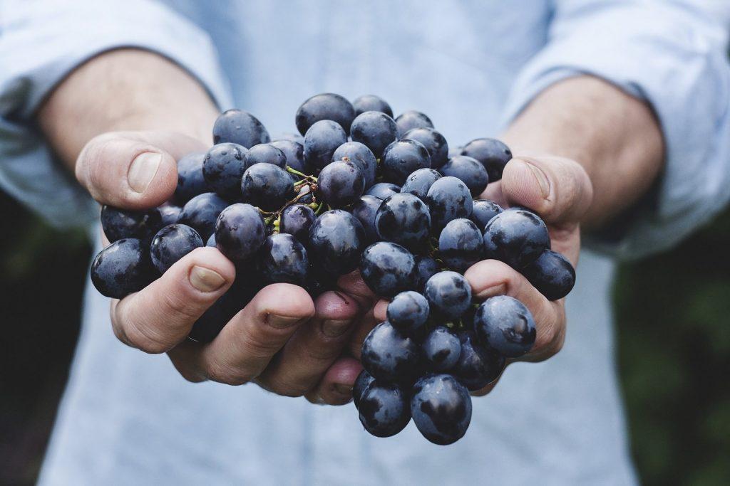 Elmo, scoperto un nuovo vitigno in Valpolicella