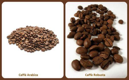 Caffè Arabica e Caffè Robusta: tutte le differenze
