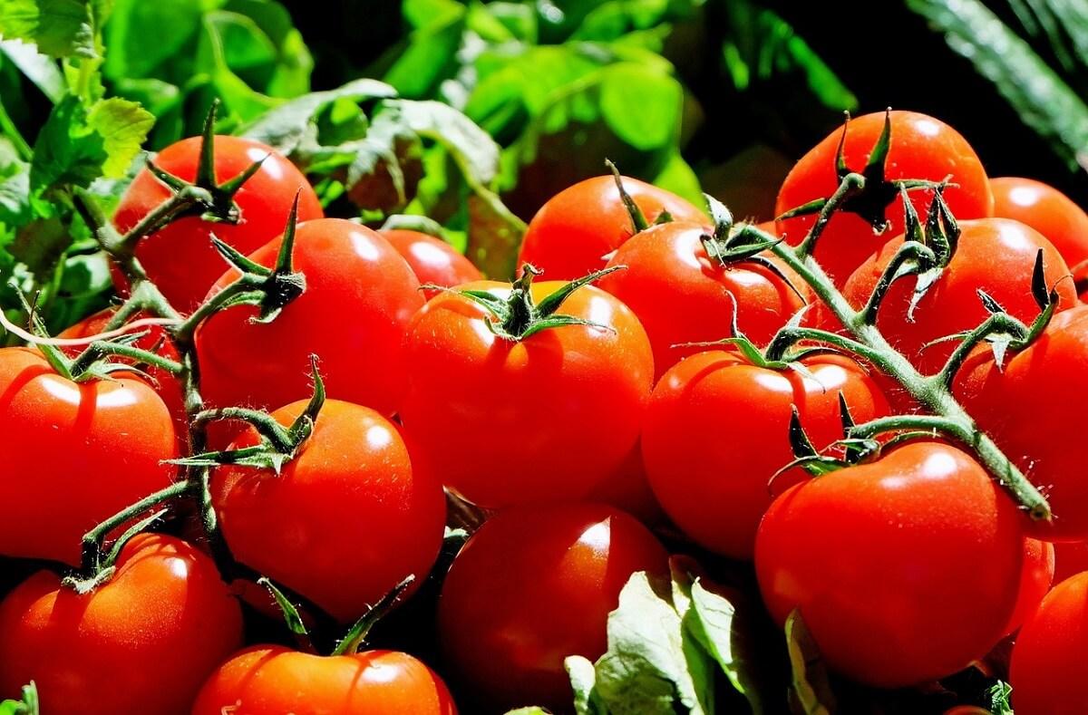 Etichetta Pomodoro e derivati: obbligo di origine