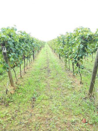 Villanoviana Vini di Bolgheri, la visita in cantina