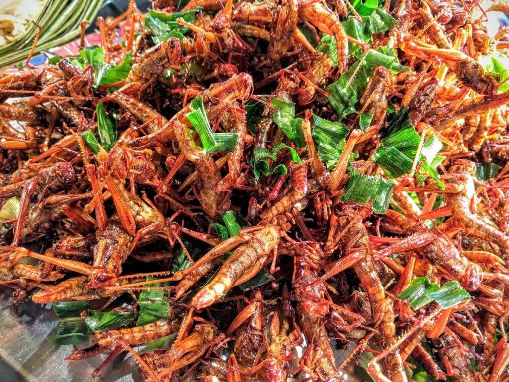 Alimenti del futuro: insetti, cibo in 3D, carne sintetica