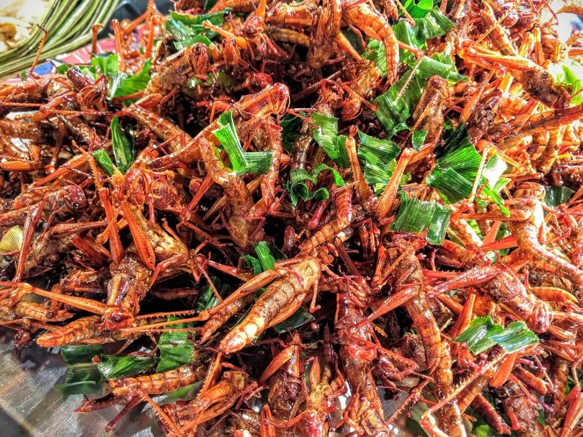 Cibo del futuro: insetti, cibo in 3D, carne sintetizzata
