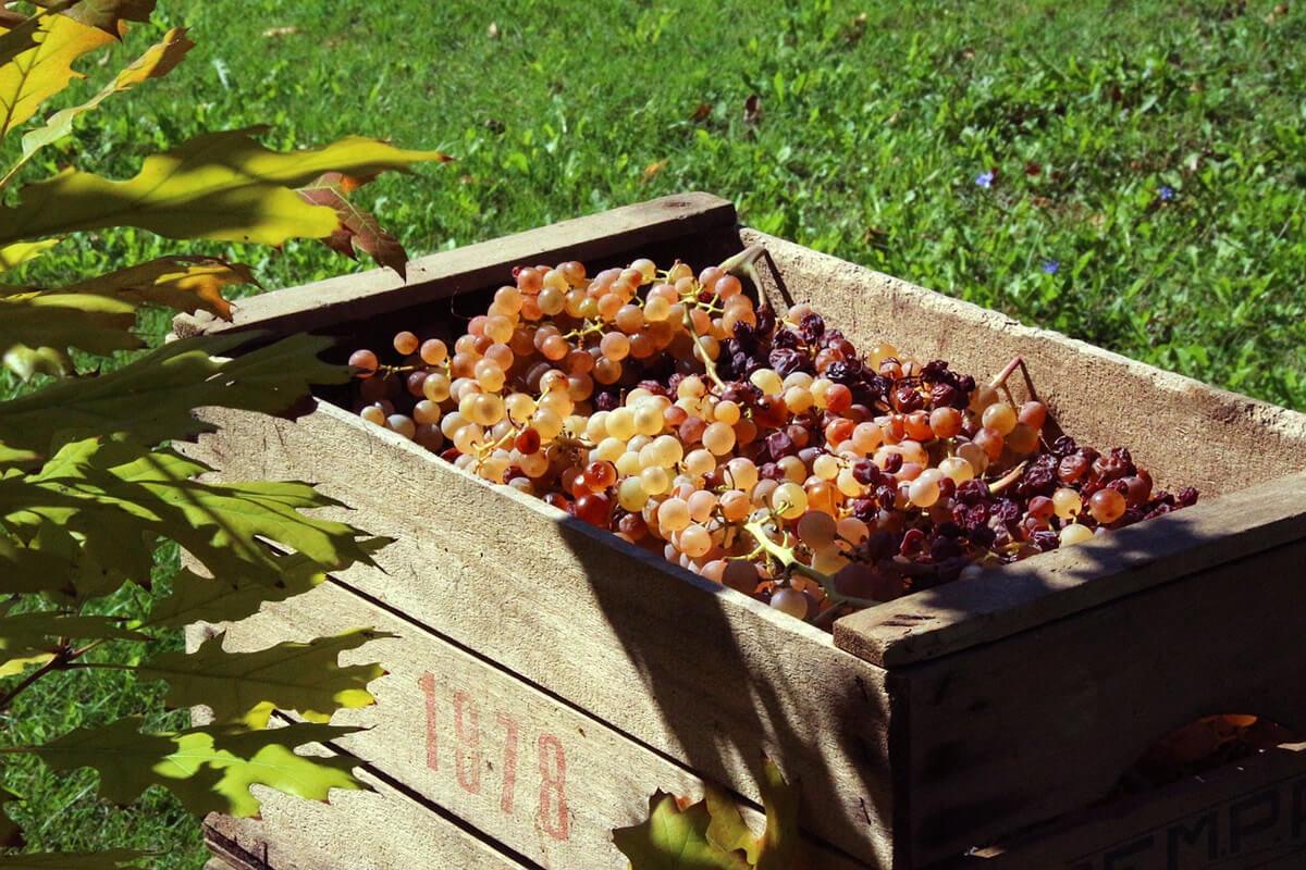Futuro della vitivinicoltura dell'Emilia Romagna
