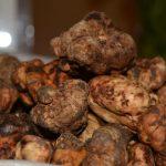 Tartufo degli Iblei, le 3 varietà siciliane