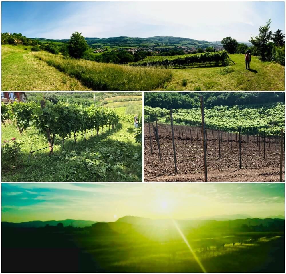 Vini Gambellara Doc, varie interpretazioni del vitigno Garganega