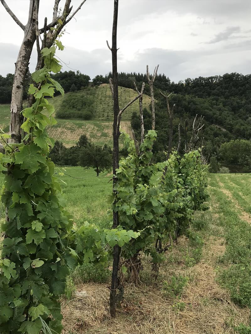 Differenze tra viticoltura integrata, biologica e biodinamica