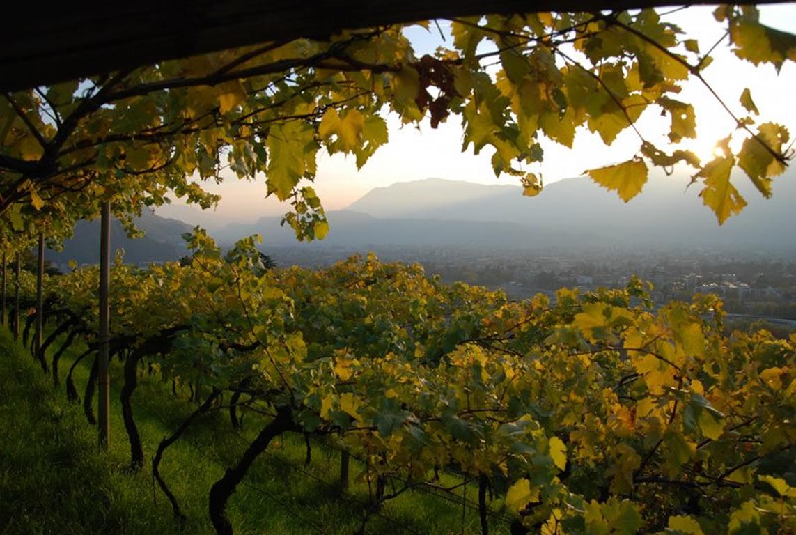 Degustazione Lagrein Riserva Cantina Messnerhof di Bolzano