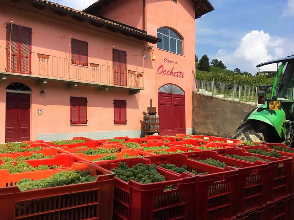 Poderi Moretti di Monteu Roero: visite guidate e degustazioni