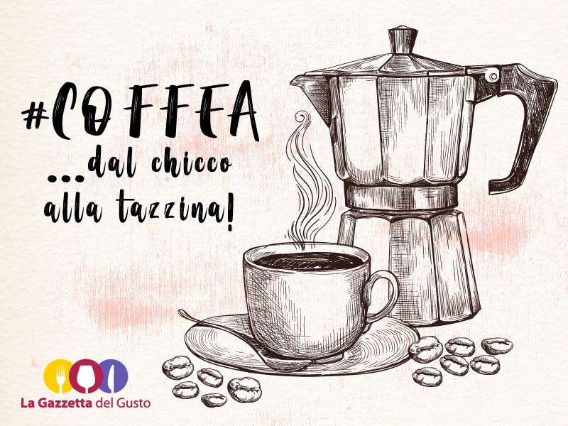 Tutto sul caffè: caratteristiche, varietà, tecniche di degustazione