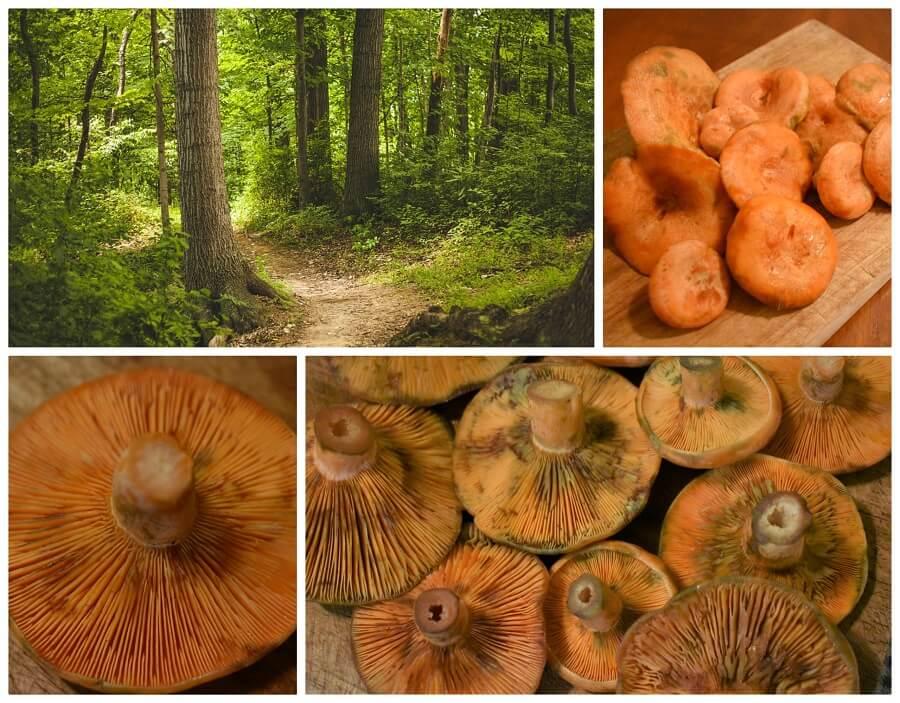 Come fare i funghi sott'olio, ricetta semplice e salva spreco