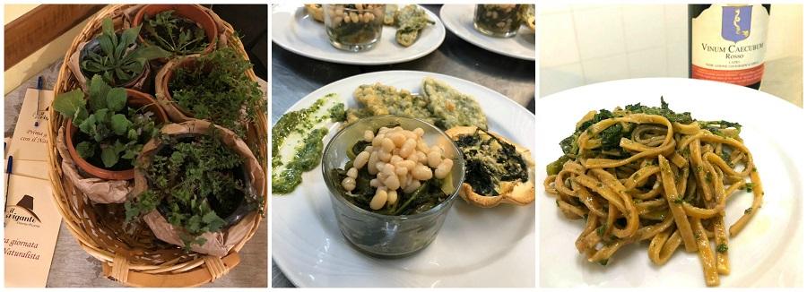 Piatti della cena con erbe di campo all'Osteria Il Brigante