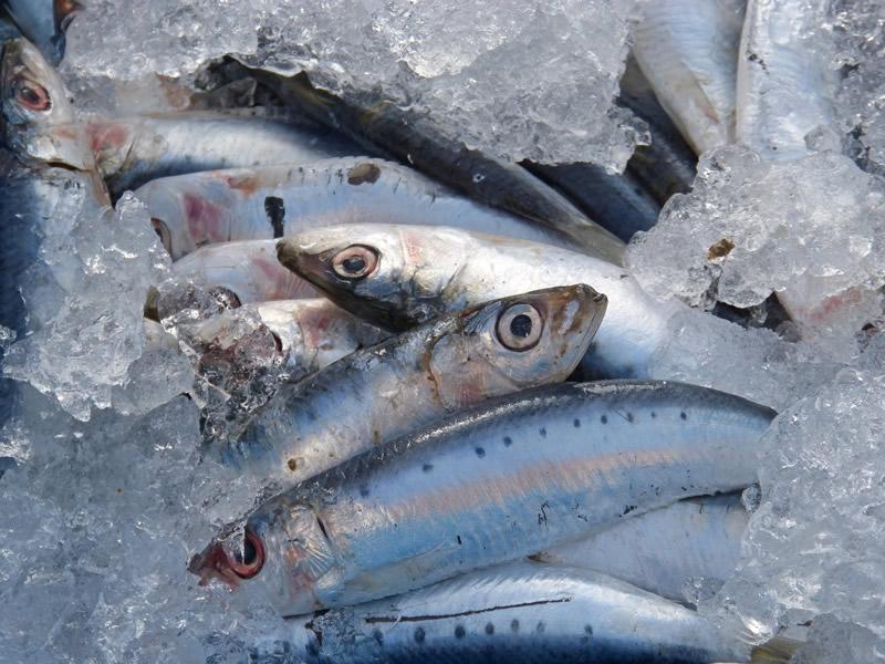 Sardine Antinfiammatori naturali