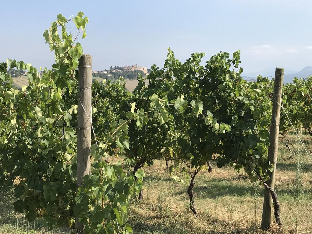 Intervista ad Alberto Mazzoni dell'Istituto Marchigiano di Tutela Vini