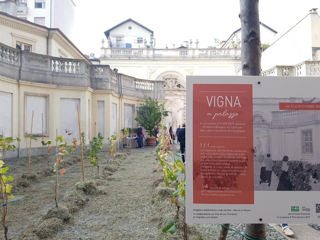varietà autoctone e vigne urbane di Torino