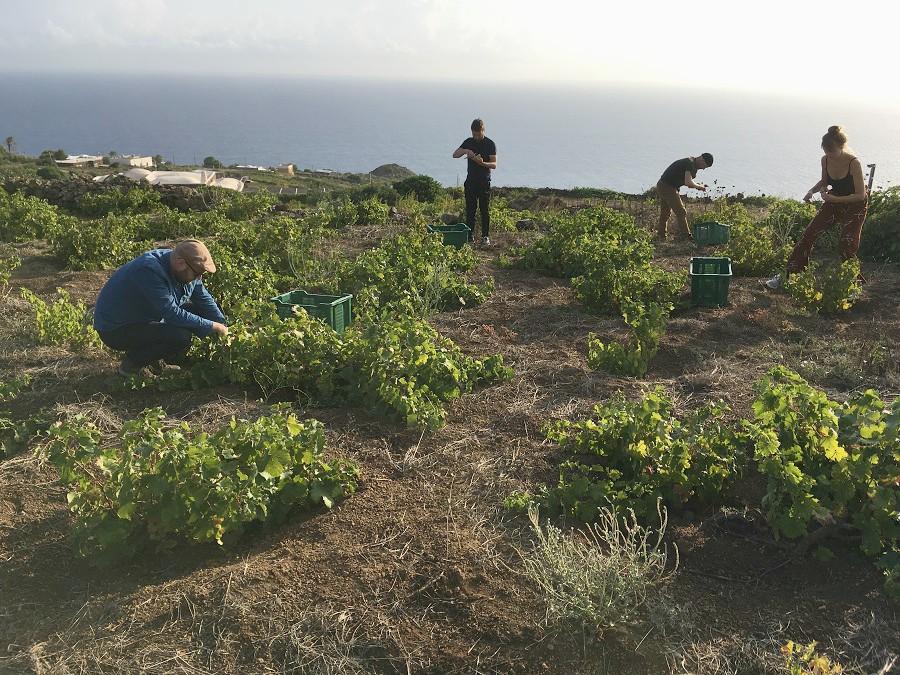 La viticoltura eroica di Pantelleria