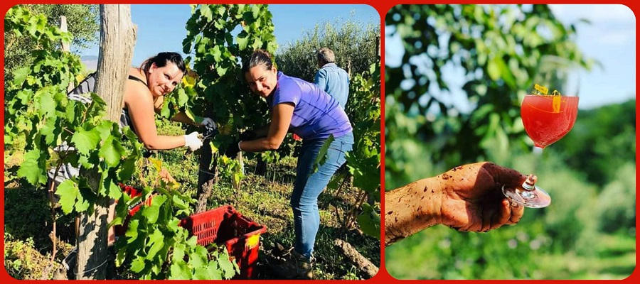 A Torino Beve Bene 2019 si degustano vini naturali