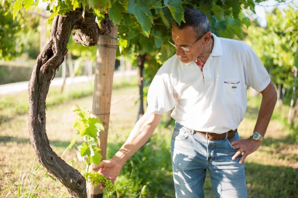 Claudio Morelli in vigna