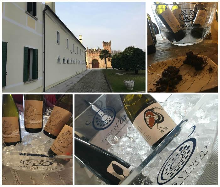 Vini da terre estreme 2020: vini eroici a Mogliano Veneto