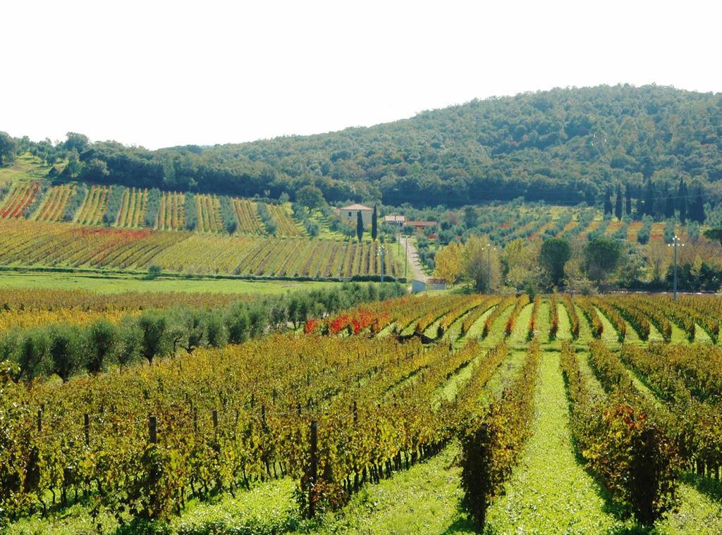 Turismo enologico in Veneto e Toscana