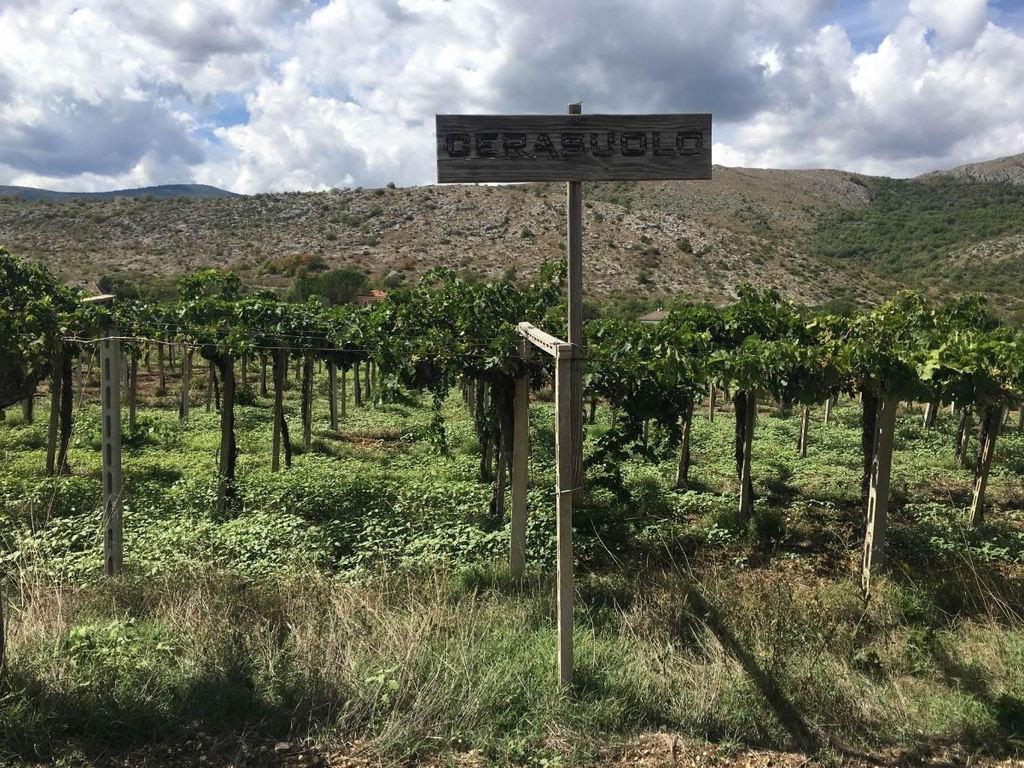 Cerasuolo d'Abruzzo: vigneti di Montepulciano d'Abruzzo