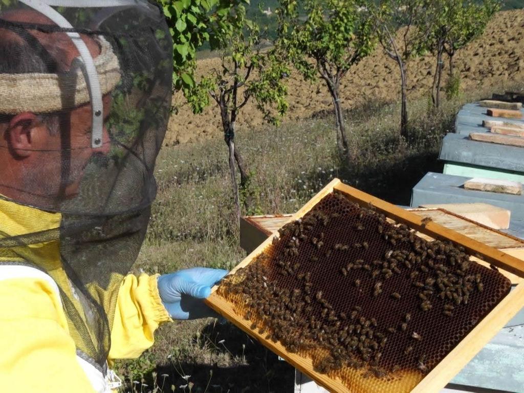 Le api stanno morendo, l'allarme degli apicoltori