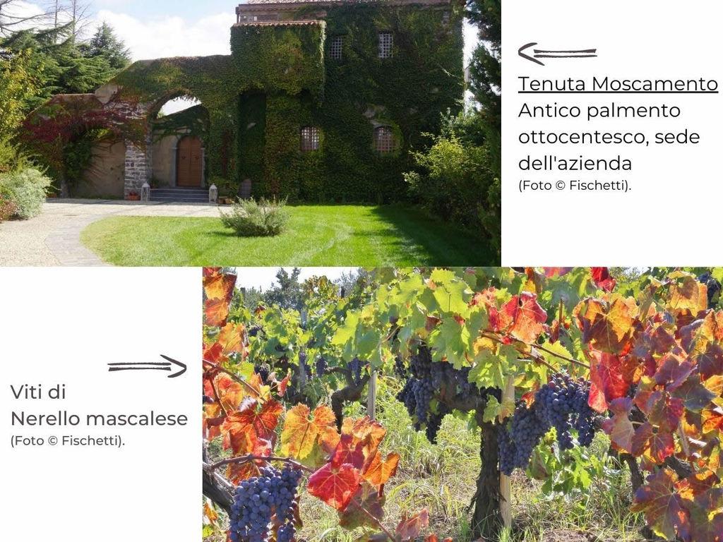 3 etichette Vini Fischetti