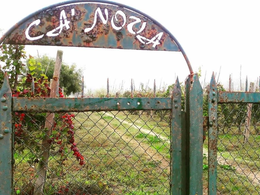 Vini del Bosco Eliceo: storia e produttori dei vini delle sabbie