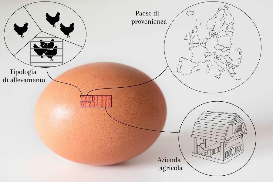 Lettura delle etichette sulle uova