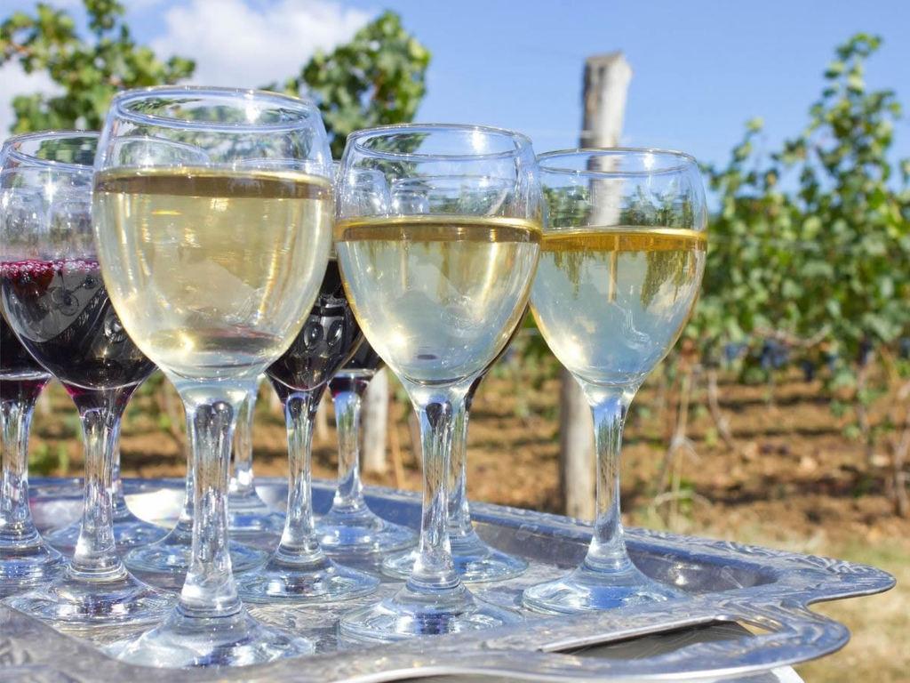 6 vini delle Marche da provare, dal Verdicchio al Rosso Conero