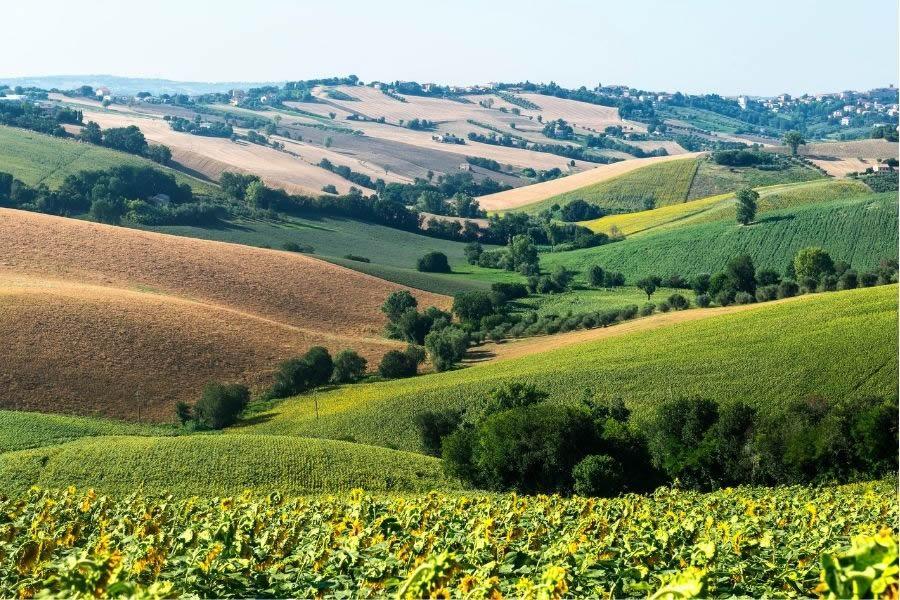 Consigli su 6 vini marchigiani da provare, dal Verdicchio al Rosso Conero