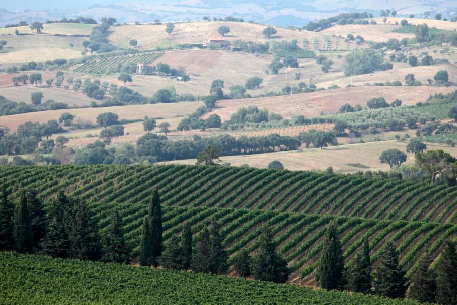 Toscana nell'etichetta del Morellino di Scansano