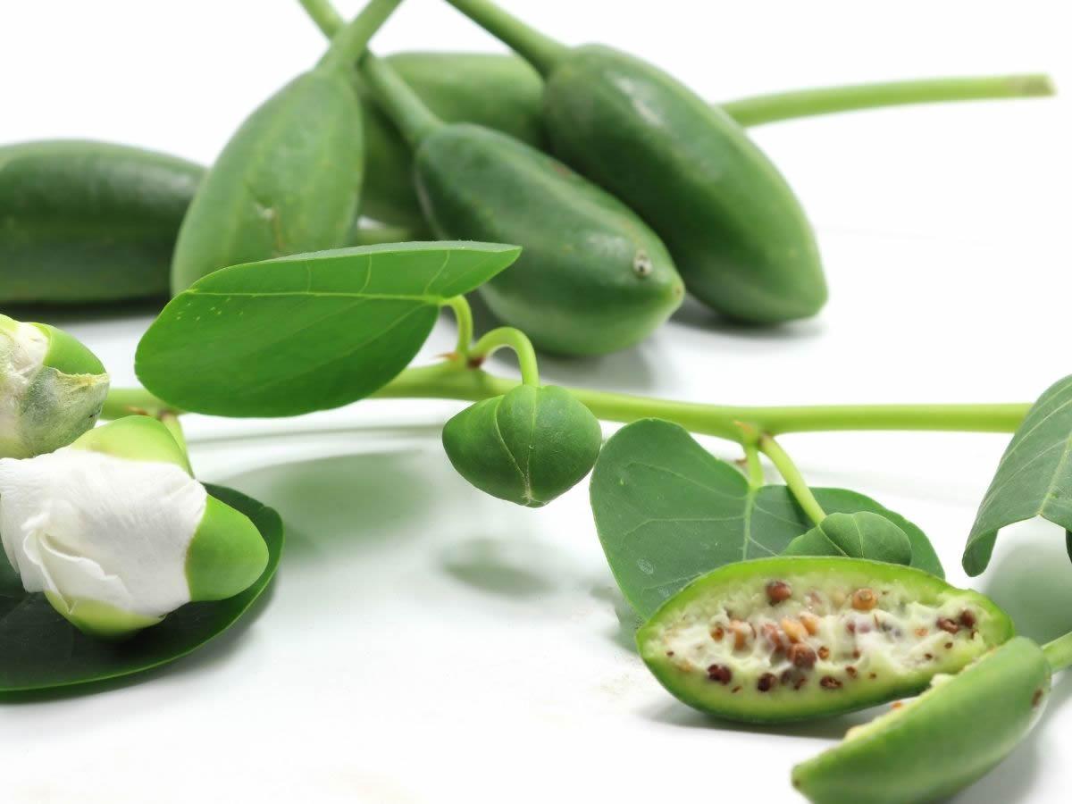 Tutto sui cucunci: i frutti della pianta del cappero