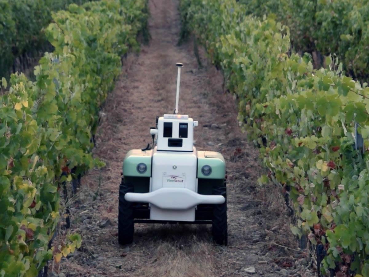 VineScout: come funziona il robot che aiuta i viticoltori