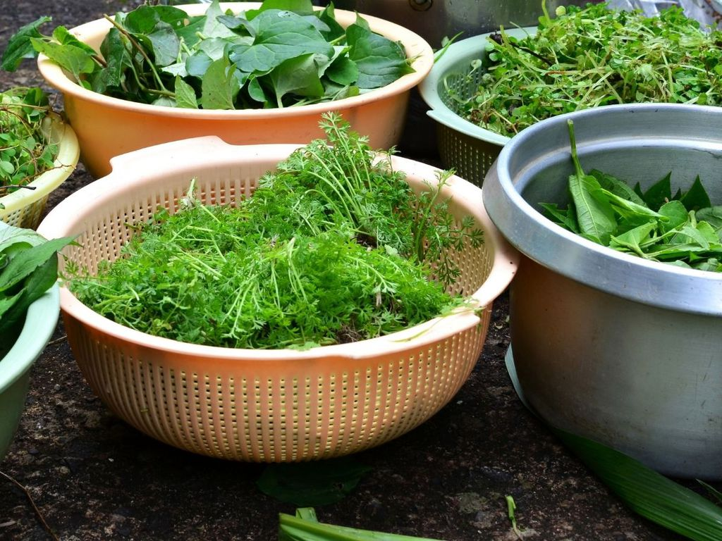 Preboggion ligure: storia, composizione e ricette del mix di erbe