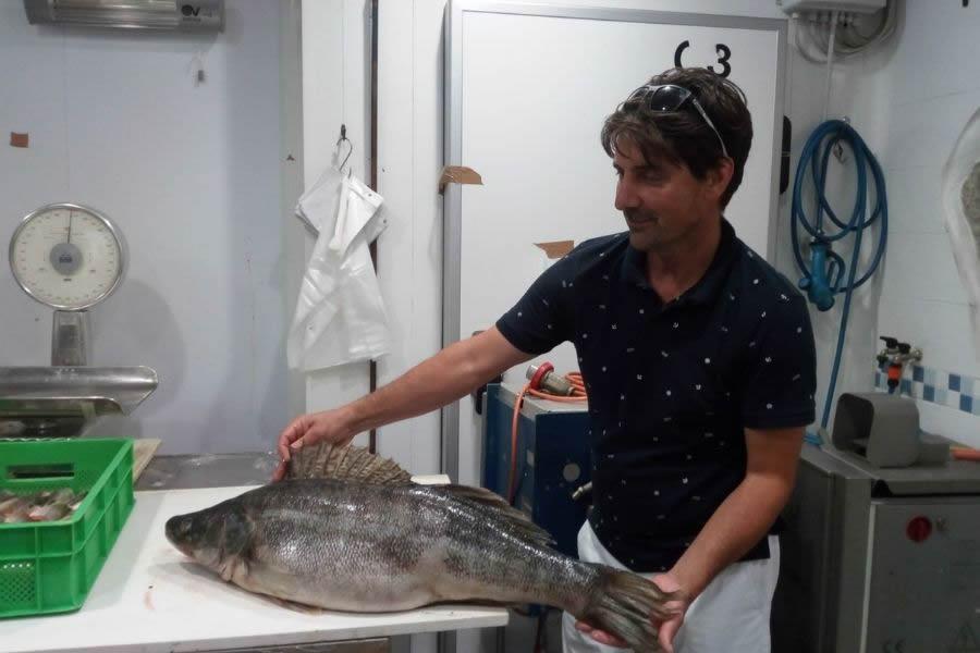 Comunicare il pesce di lago: alla scoperta del Verbano