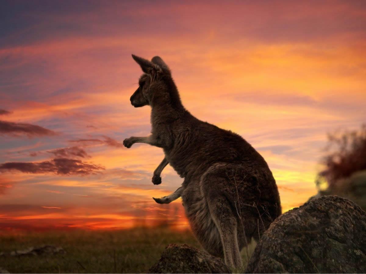 Cucina australiana: 6 specialità da provare