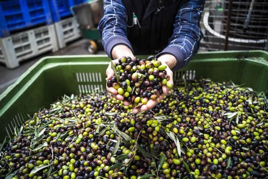 Le 4 Tipologie di olio di oliva